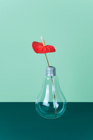 Red Anthurium flower in vase on green background.