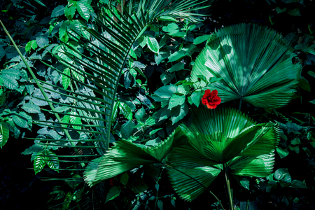 Tropical green leaves on dark background.