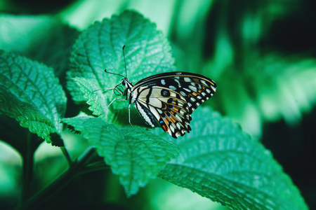 Beautiful butterfly sitting on green leaves.