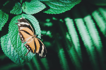 Beautiful orange and black butterfly sitting on green leaves.