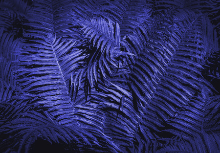 Beautiful background made with young green fern leaves. Tropical background.