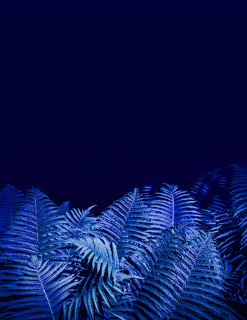 Tropical leaves on dark background. Nature forest plant concept