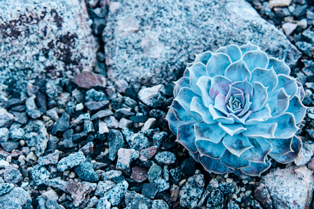 Small succulent in a flowerpot. Creative minimal concept. Stock Photo