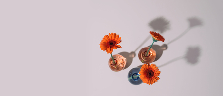 Orange daisy flower in a vase on trendy background. Copy space. Stock Photo