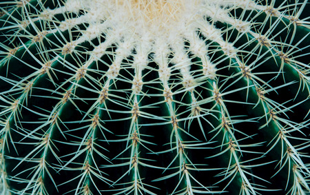 Closeup of beautiful small cactus. Nature concept.