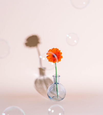 Orange daisy flower in a vase on trendy background. Copy space. Kho ảnh