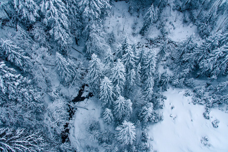 Aerial view of snow covered pine forest in Switzerland, Europe.