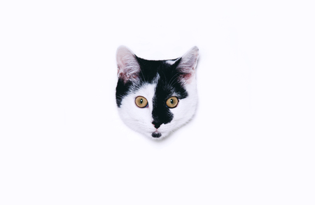 Cute cat looking out from a round window on white paper background. Minimal art style with copy space.