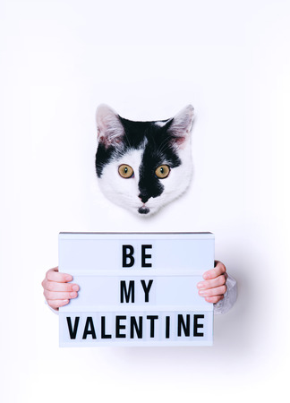 Cute cat holding Be My Valentine sign on white background. Minimal art style.