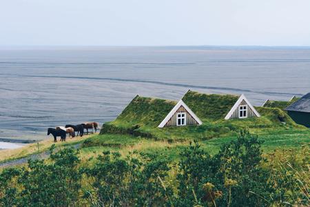 Chevaux islandais et petite maison typique en Islande. Architecture ancienne avec toit herbeux. Banque d'images