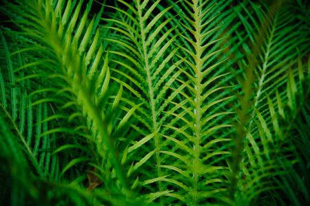 Tropical green leaves on dark background. Nature forest plant concept