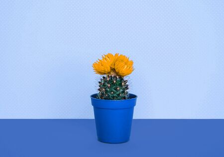 Small cactus in a flowerpot on a trendy blue background. Creative minimal design.