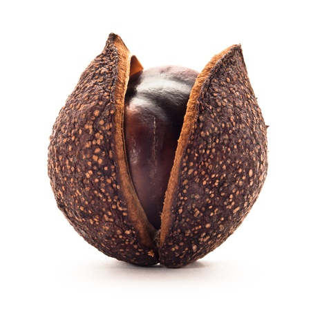 Chestnut in its natural shell