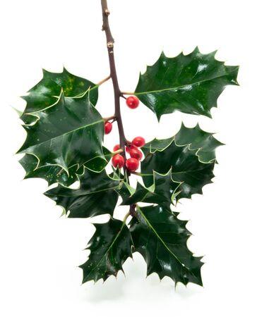 Holly twig on white background photo
