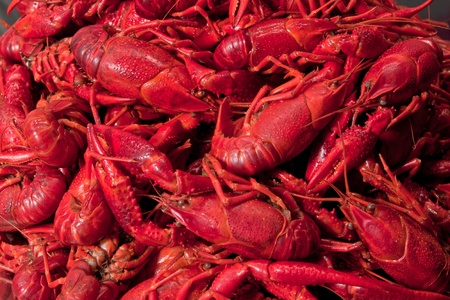 Close up of a crowdy bunch of red cooked crawfish photo