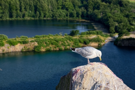 Seagull standing on a rock with water in the background