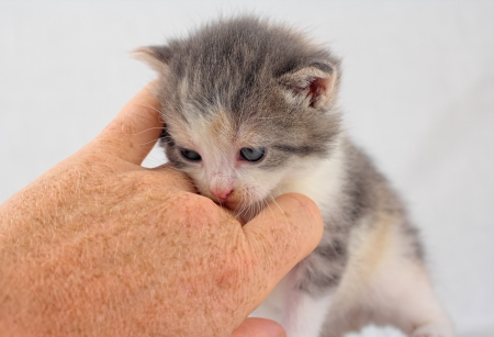 Small kitten being cuddled by a human hand