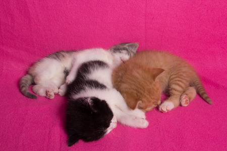 Three sleeping kittens on a pink blanket photo