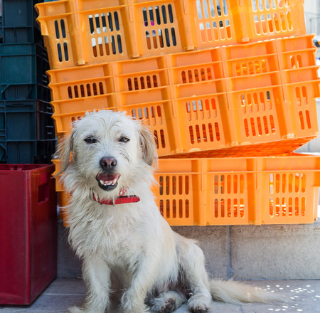 Street dog sitting in front of plastic boxes in Corfu Town Stock Photo