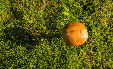 Top view of a Leccinum scabrum in a green lawn