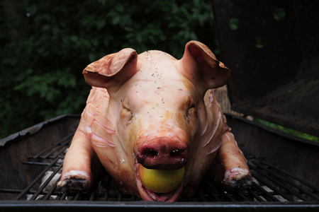 looking straight at a pigs snout with an apple in the mouth ready to be grilled