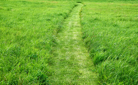 cut grass: Very clear and lightly curved cut path leading through a field of rough fresh green grass