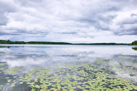 Lake Sjaelsoe in Birkeroed, Denmark, on a gray overcast summer day, with waterlilies growing  in the water surface
