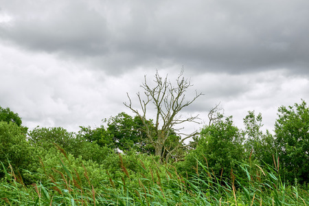 Dead tree rising from an overgrown wilderness of bushes and trees at Sjaelsoe exercise field in Birkeroed, Denmark