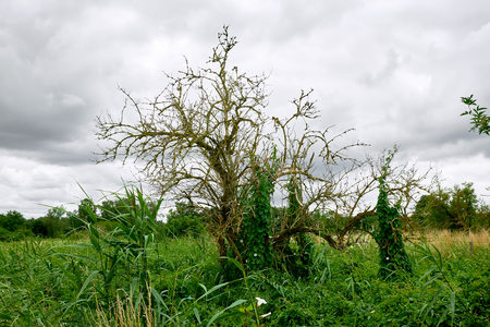 Small dead tree rising from an overgrown wilderness at Sjaelsoe exercise field in Birkeroed, Denmark