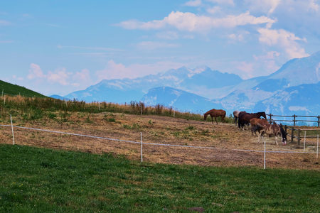 Herd of horses in a pound made of sticks and a white string, on a grass field in the village Albiez-Montrond in the french Alps Stock Photo