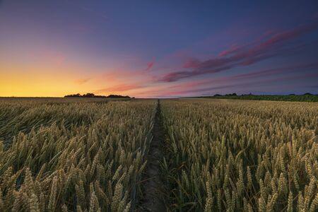 Field in Denmark at sunset