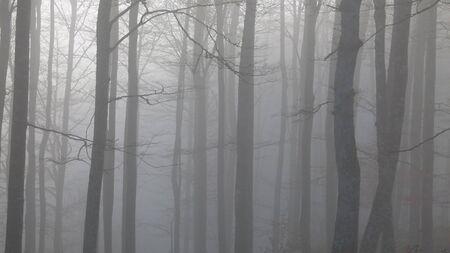 beechwood: Foggy sunrise in the forest