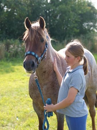 Een jong meisje streelt een roan pony in een hoofd kraag Stockfoto