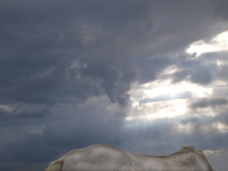 dapple grey: An abstract image of the back of a horse against a stormy sky.
