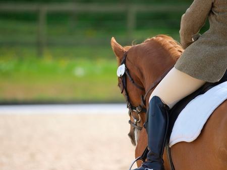 Een close-up van de zijkant van een paard en ruiter tijdens een dressuur beweging geschoten met een ondiepe diepte van het veld.