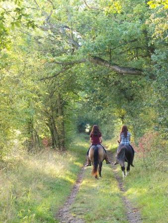 hacking: Due ragazze cavalcare cavallo nudo indietro di distanza dalla fotocamera in una viuzza autunno verde. Archivio Fotografico