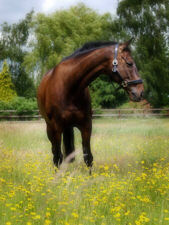 free riding: A bay horse stands in a field of wild flowers.