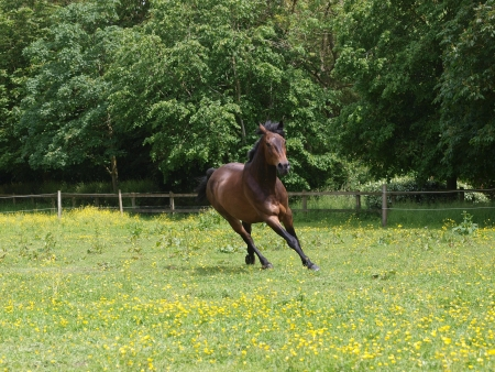 A horse canters through a meadow of wild flowers Stock Photo - 17204888