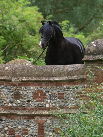 A black pony stands at the top of a bridge. Stock Photo - 17204836