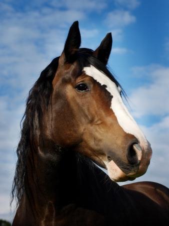 Een mooie baai paard hoofd geschoten tegen een blauwe hemel Stockfoto