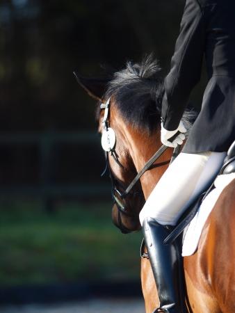 Een abstract schot van een paard tijdens een wedstrijd. Stockfoto