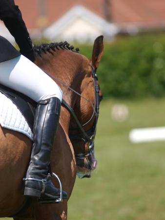 Een abstract shot van een paard tijdens een dressuur wedstrijd. Stockfoto