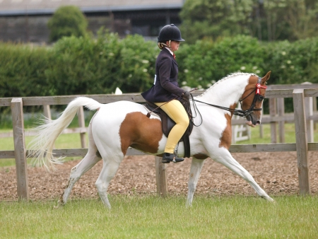 skewbald: A girl ride a skewbald horse in the show ring.