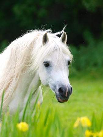 A beautiful white stallion stands in a meadow of wild flowers.