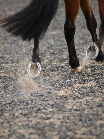 Een abstract schot van een paard draven toont zijn schoen.