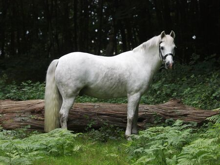 pretty pony: A pretty grey pony stands alone in a forest.