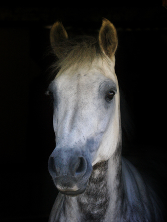 A head shot of a pretty pony against a black background.
