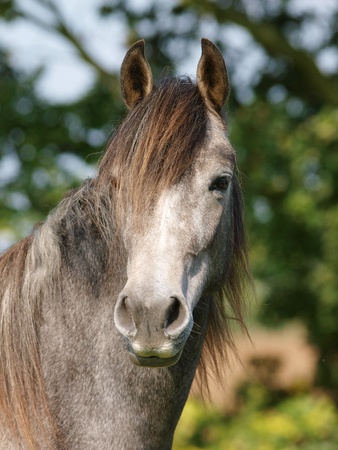A head shot of a single horse in a paddock.