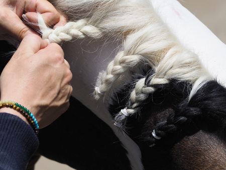 A close up a a girl plaiting a horses mane ready for the show ring.