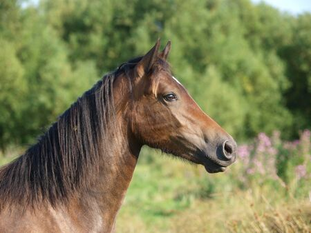 A headshot of an older Welsh pony in good condition standing in a paddock.